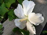 Intermediate - bob-allen - domesticated-flowers-21-points