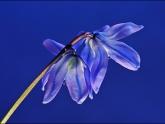 Advanced - jean-debruyn - domesticated-flowers-22-points