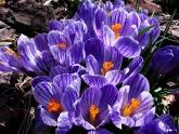 Intermediate - laura-renier - domesticated-flowers-21-points