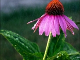 novice-tered-domestic-flowers-24-points