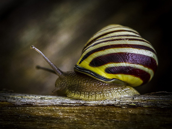 DaveSt-CAPA-N-Snail's Pace-2013-10-22__21