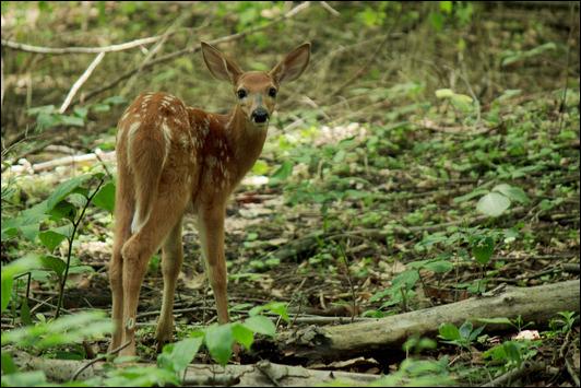ReaganS-CAPA-N-Bambi-2013-10-22__20