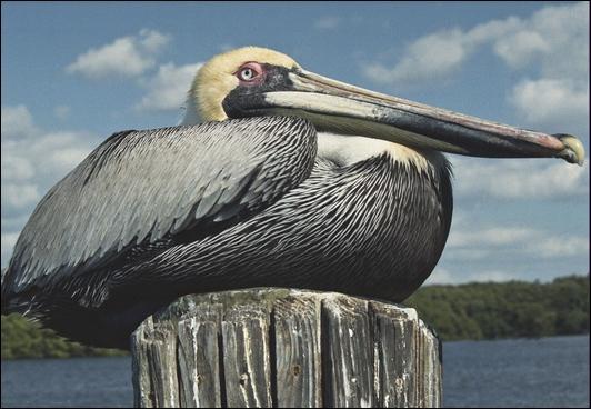 noelc texture2 pelican 20110222 __17 PiF